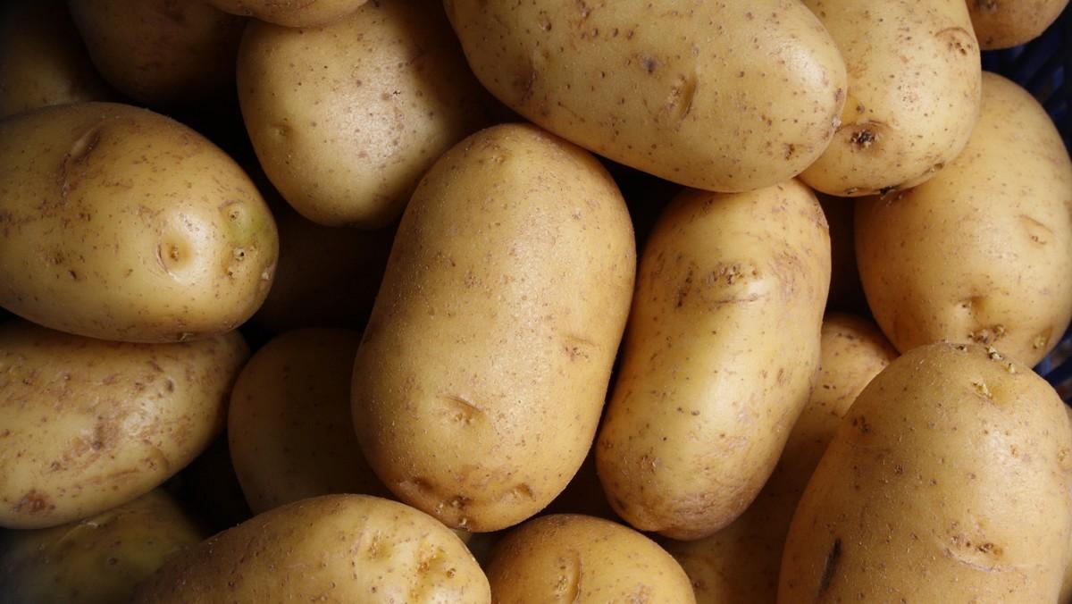 Brambory, které slouží pro přípravu pokrmu zvaného bramboráky.
